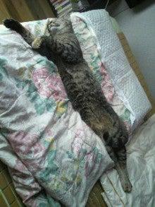Kuu 寝る 遊ぶ-2011071109250000.jpg