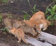 今日も快晴バセット日和-親猫&子猫