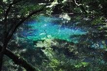 白神山地ツアーで能代山本地区の活性化すっぺ-2011年7月の白神山地「十二湖」最新情報10