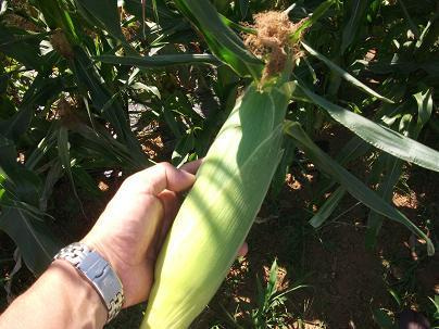 農業のトータルコーディネータ  イノウエ農商事のブログ-07133