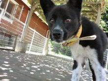 東北動物レスキュー 長崎の保健所の命を救う会の代表のブログ-1番ポニョ