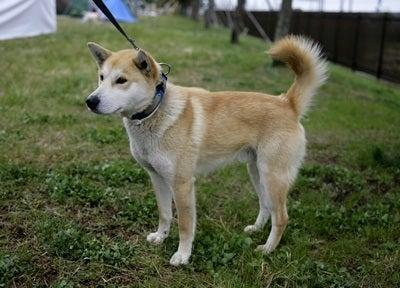 東北動物レスキュー 長崎の保健所の命を救う会の代表のブログ-ヤックル