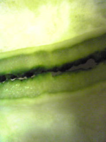 できる範囲でカラダにいいものを食すことを試みる。ケセランパサラン食堂-Image549.jpg