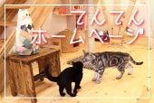 猫カフェてんてん-猫カフェてんてんホームページ