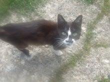 北海道北見市 猫の里親募集 飼い主を失った10匹の猫たち。。。