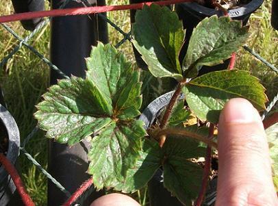 農業のトータルコーディネータ  イノウエ農商事のブログ-2307224