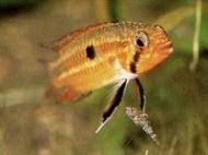 ミムーのお魚になりたい