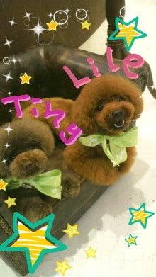 $☆Tiny tiny's Story☆