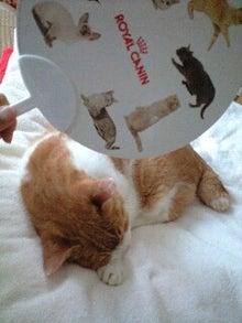 ずれずれブログ…湘南で猫と暮らせば…-110724_1137~0001.jpg