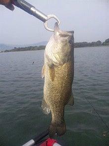 Dr.ミーヤンの下手っぴい釣りブログ-47cm,11,7/23-3