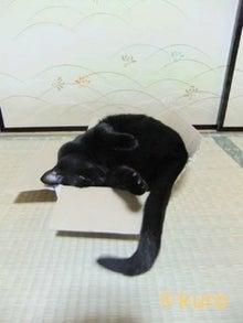 甘えん坊将軍おくろさま参上!-phogo20110724210629_0.jpg
