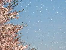 夫婦世界旅行-妻編-花吹雪