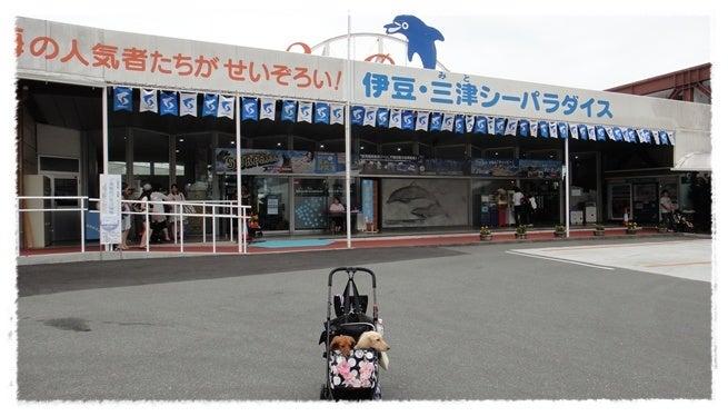 旅犬Lani&Leaのほほん風船記-三津シーパラダイス