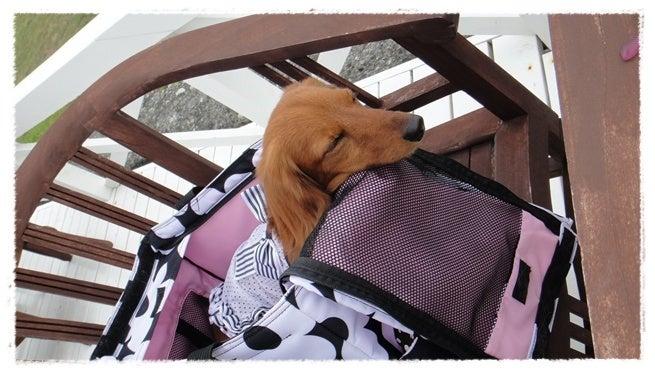 旅犬Lani&Leaのほほん風船記-Tam Tam gallery