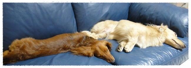 旅犬Lani&Leaのほほん風船記-Lani&Lea