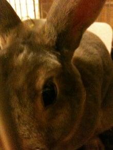$Rabbit's Life-未設定