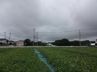 農業のトータルコーディネータ  イノウエ農商事のブログ-07261