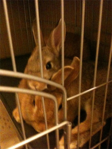 $Rabbit's Life