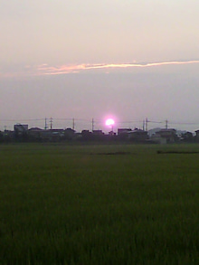 ☆蘭ラン日記☆ -2011072604490000.jpg