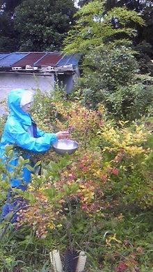 みわくのみわくん 園山農園ブログ-201107270859001.jpg