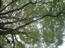 イクメンファミリーのココロを元気にする☆コトバの貯金箱-公園の木