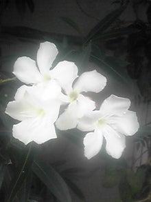 ㈲山下植物園のブログ-110727_1053~01.JPG