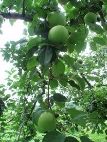 長野とりんごと私