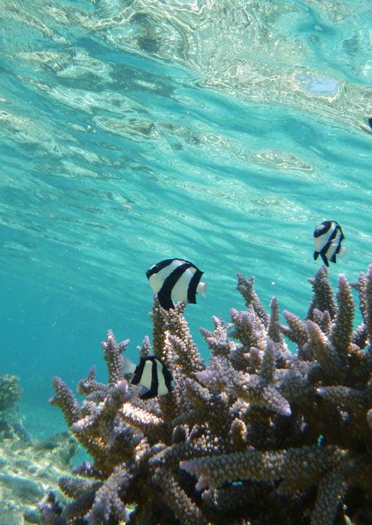 ケロケロの散歩道-珊瑚