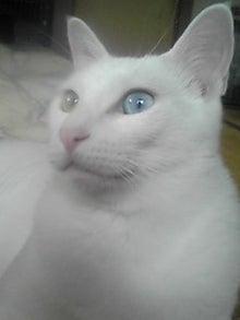 猫マンガ  「猫11匹といれば」 -110802_1620~02.JPG