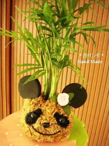 Clover tea room の小さな幸せっ!!-こけパンダ
