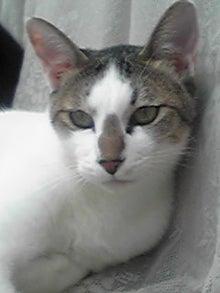 猫マンガ  「猫11匹といれば」 -110804_1242~01.JPG