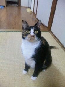 $溺愛猫のツレヅレ猫日記-110804_19412611.jpg