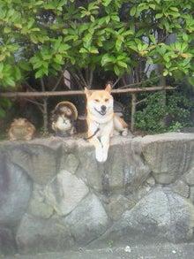 柴犬あらしのブログ