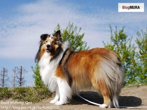 にほんブログ村 犬 写真へ