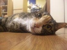$溺愛猫のツレヅレ猫日記-110806_19283911.jpg