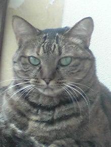 猫マンガ  「猫12匹といれば」 -110804_1240~01.JPG