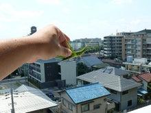 和光市長 松本たけひろの「持続可能な改革」日記-バッタ2
