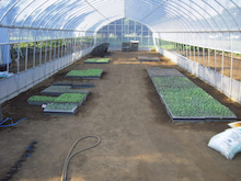 新規就農をめざすランナーのブログ