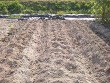 耕作放棄地をショベル1本で畑に開拓!週2日で10時間の野菜栽培の記録 byウッチー-110809たまねぎ苗床準備と太陽熱処理方法04