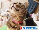 potojakamamaの日常日記-バナーねこ