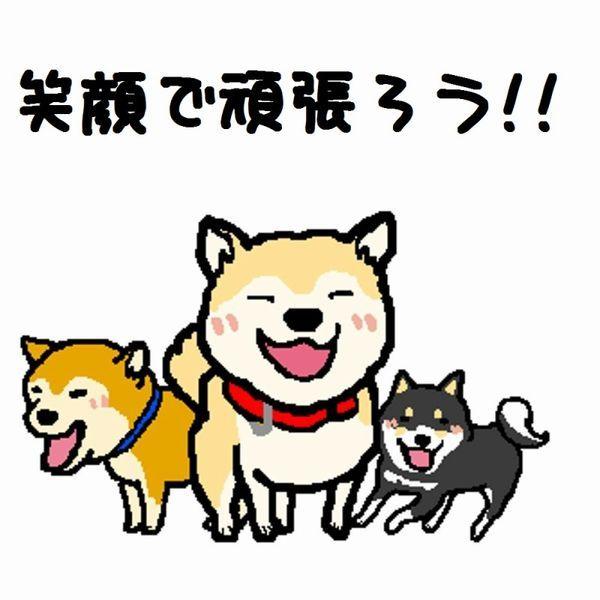 $柴犬 Coo と 空の日記