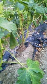 農園長のブログ-2011081517510000.jpg