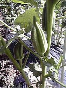 農園長のブログ-2010061615250000.jpg
