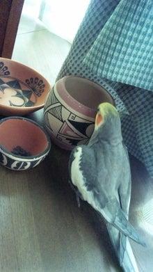オカメインコのももちゃんと花教室と旅日記-110816_084325.jpg