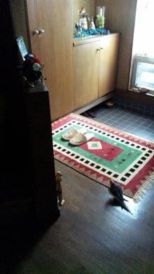 オカメインコのももちゃんと花教室と旅日記-110816_084445.jpg