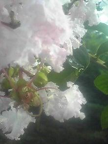 ㈲山下植物園のブログ-110803_1758~02.JPG