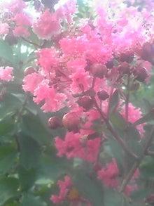 ㈲山下植物園のブログ-110803_1806~02.JPG