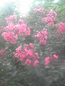 ㈲山下植物園のブログ-110803_1806~01.JPG