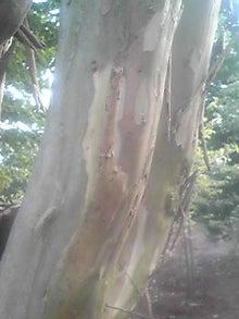 ㈲山下植物園のブログ-110803_1805~01.JPG
