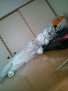 ウサ猫とポチャ猫-20110818153611.jpg
